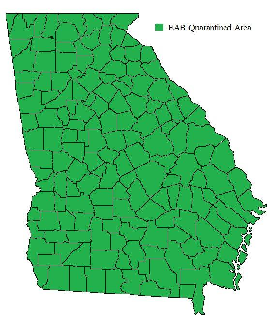Emerald Ash Borer (EAB) - Ga Dept of Agriculture on map of forest fires, map of ambergris, map of bay village, map of log country cove,